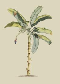 Kaart Ansichtkaart Bananen Boom - Banana Tree
