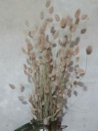Bos Gedroogde Grassen Droogbloemen Lagurus Hazenstaart Naturel