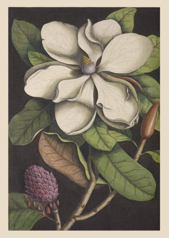 Kaart Ansichtkaart Bloesem - Magnolia