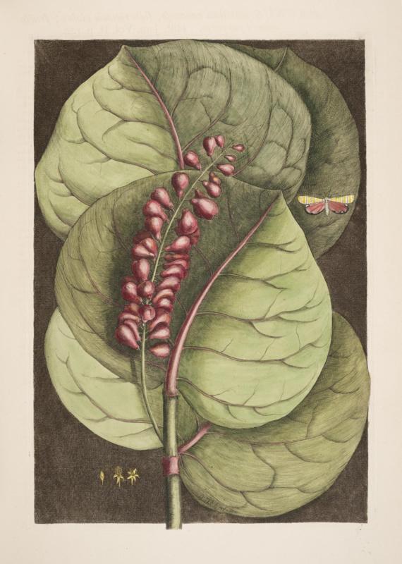 Kaart Ansichtkaart Botanisch - Botanical