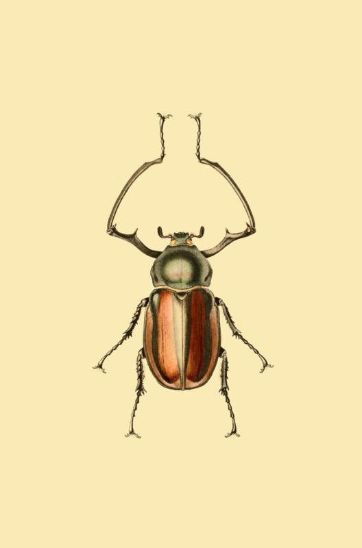 Kaart Ansichtkaart Kever - Beetle Insect