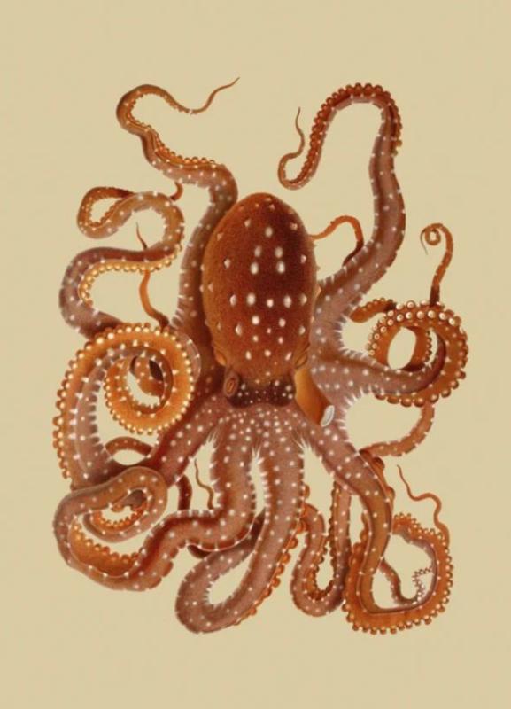 Kaart Ansichtkaart Oktopus - Octopus