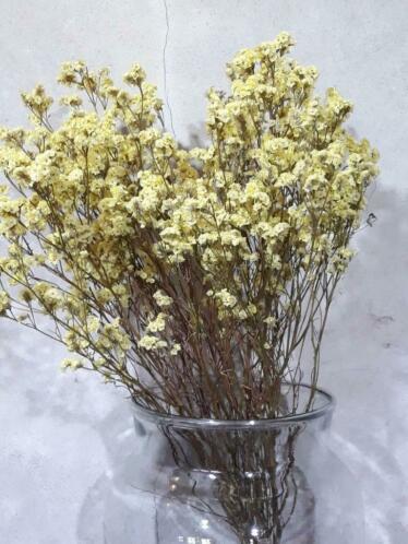 Gedroogde Droogbloemen Bos  Limonium Sinensis Geel
