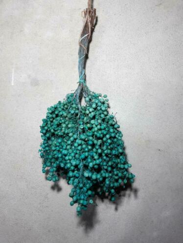 Bos Gedroogde Pepperberries Peperbessen Turquoise
