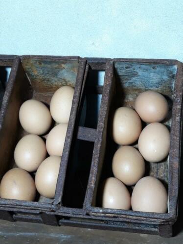 Set van 12 Bruine Paaseieren Kippenei Ei Bruin