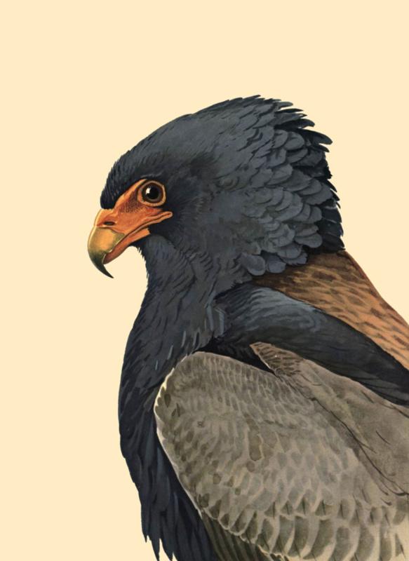 Kaart Ansichtkaart Arend - Eagle