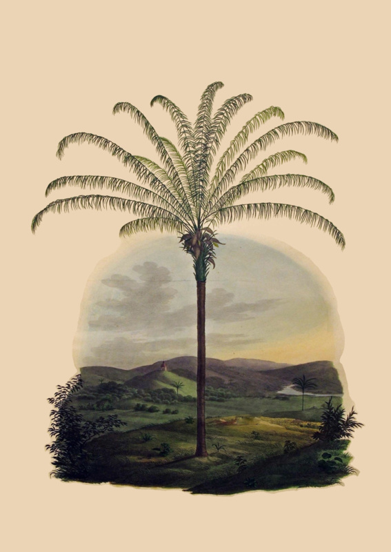 Kaart Ansichtkaart Palmboom - Palmtree