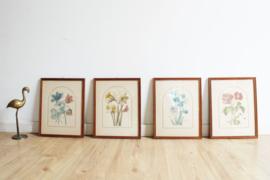 Set van 4 botanische prenten in lijst. Vier vintage 'schilderijtjes'