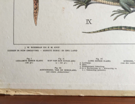 Zeehonden: Dubbelzijdige schoolplaat van Koekkoek. Vintage poster op karton