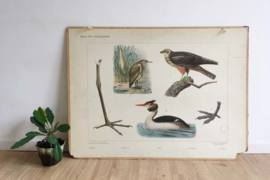 Het bos: Dubbelzijdige schoolplaat van Koekkoek.  Vintage poster op karton