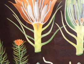 Haarmos: Vintage schoolplaat. Originele retro schoolkaart, plantkunde. Hagemann/Jung-Koch Quentell,