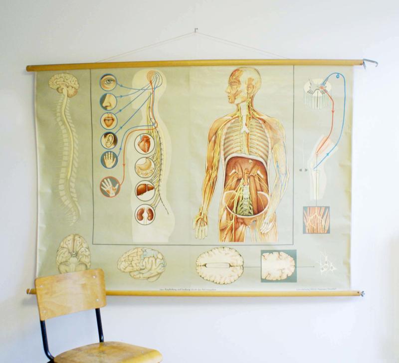 Het zenuwstelsel: Grote vintage schoolkaart. Hagemann, Anatomie van de mens.