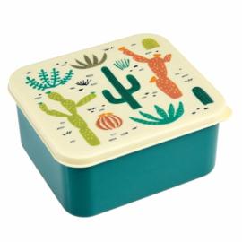 Rex - Lunchbox Cactus