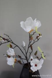 Magnolia tak creme