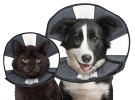 Zenpet Procone L - Gratis Verzending - Pebbledogshop