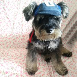 Honden Pet Blauw Small Voor de kleiner hond - In Voorraad