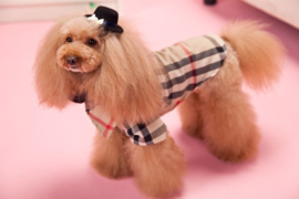 Hondenshirt & Blouse Ruitjes  -Large - Ruglengte 33-35 cm-In Voorraad