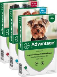 Advantage 40 Hond (tot 4kg) 4 pipet