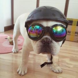 Motorhelm voor honden Zwart - Small - IN VOORRAAD