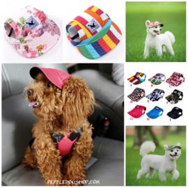 Honden pet Colour S - IN VOORRAAD