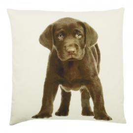 Kussen canvas hond labrador bruin 50x10x50 cm