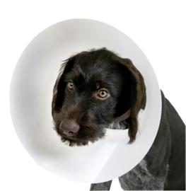 Hulpmiddelen voor honden