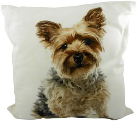 CANVAS YORKSHIRE TERRIER BOY  MARS&MORE