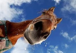 Paarden Feestje.