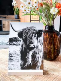 poster Schotse hooglander A4