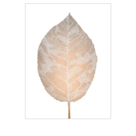 Monika Petersen Birch leaf Gold/ White