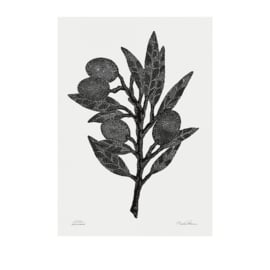 Monika Petersen Olive Branch Poster Black