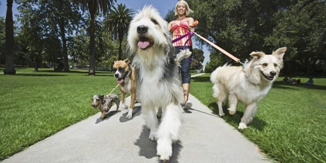 beweging en transport honden-shop-online.jpg