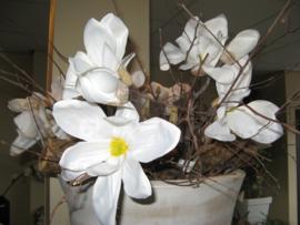Bloesemtak Magnolia 30 cm € 5,-