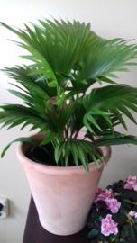 Palm vanaf € 30,-