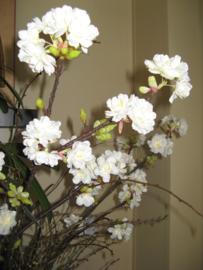 Bloesemtak Prunus 90 cm € 7,95