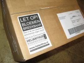 Bloemenbezorging met Post.nl  € 9,00