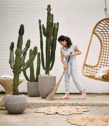 Cactus groot vanaf € 100,-