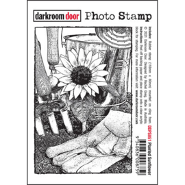 DarkroomDoor- Photo Stamp Planted Sunflower