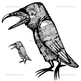 Stampotique - 4051 - Raven and Chick