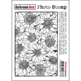 DarkroomDoor- Photo Stamp Gerberas