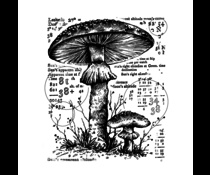 Counting Toadstools - Crafty Individuals