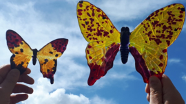 grote geel/rode vlinder