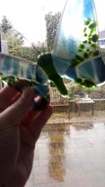 Blauw/groene vlinder
