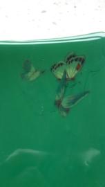green with 3 little butterflies