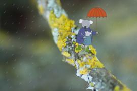 Verderkijker paraplu
