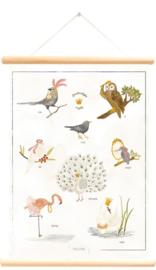 Schoolplaat magische vogels