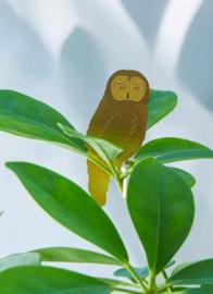 Plant Animal Owl uil