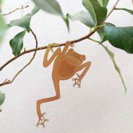 Plant Animal Tree Frog boom kikker