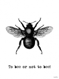 Poster - To bee or not to bee - vanilla Fly