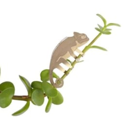 Plant Animal Chameleon kameleon